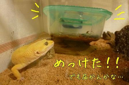 4もんちゃん 063