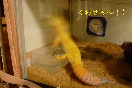 もんちゃん 030