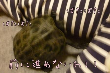 5もんちゃん 009
