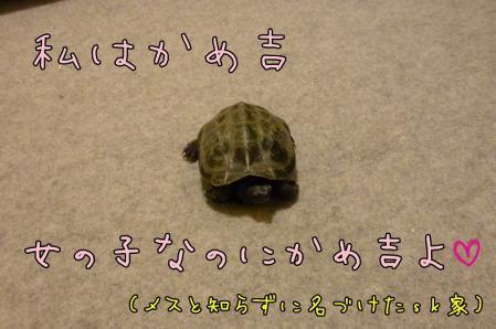 1もんちゃん 008