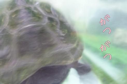 もんちゃん 034-1