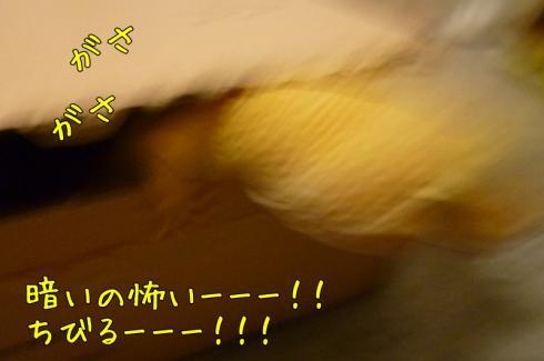 もんちゃん 013