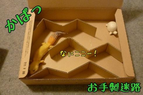もんちゃん 008