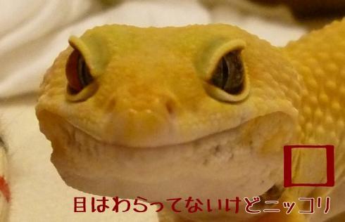 もんちゃん 016-crop