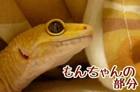 もんちゃん 037