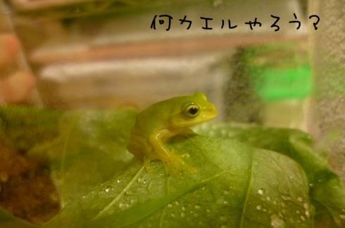 ★もんちゃん 064