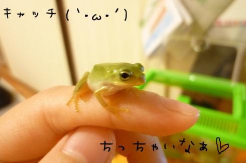 ★もんちゃん 082