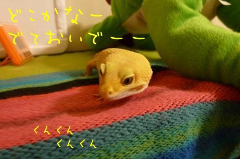 もんちゃん 108
