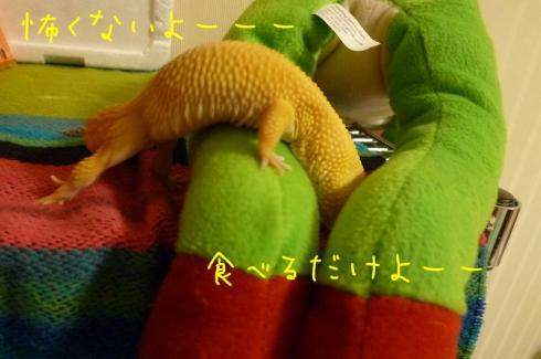 もんちゃん 107