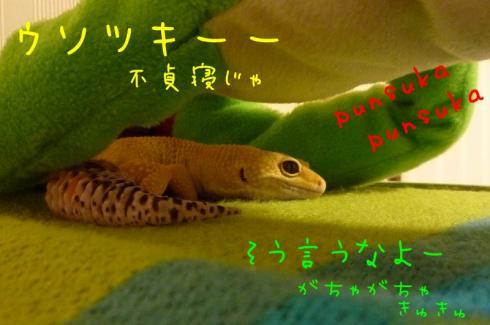 もんちゃん 148