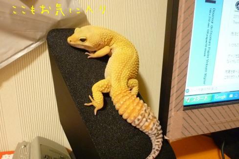 もんちゃん 006