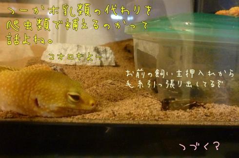 もんちゃん 067.