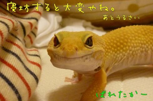 もんちゃん 016