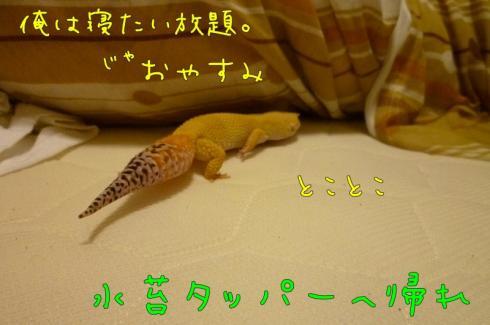もんちゃん 032