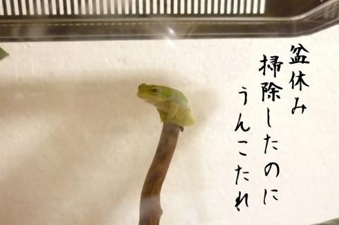 もんちゃん 010