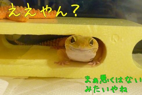 もんちゃん 097