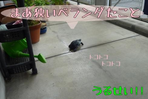 もんちゃん 023