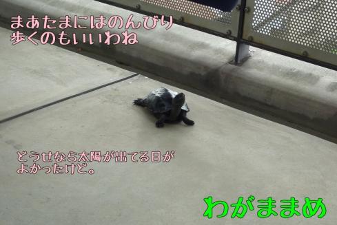 もんちゃん 024