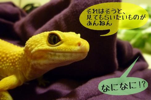もんちゃん 058-1
