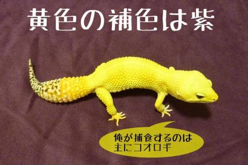 もんちゃん 052