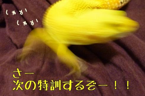 もんちゃん 050