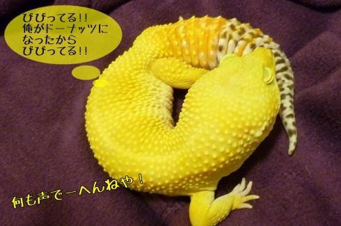 もんちゃん 079