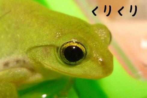 もんちゃん 028