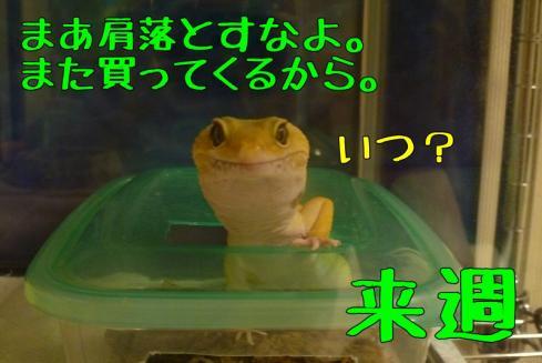 もんちゃん 039