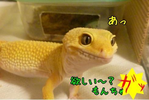 もんちゃん 071