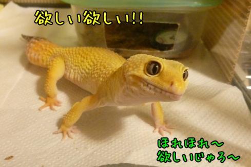 もんちゃん 057