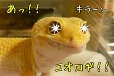 もんちゃん 062-2
