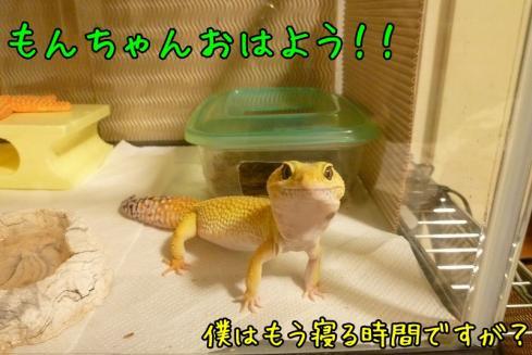 ★もんちゃん 074