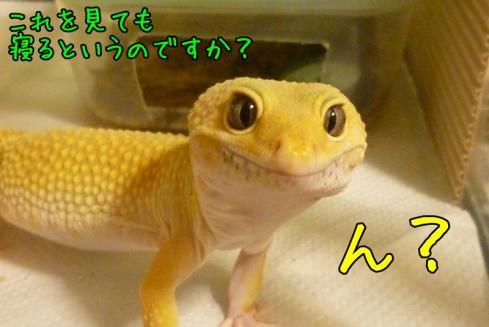★もんちゃん 070