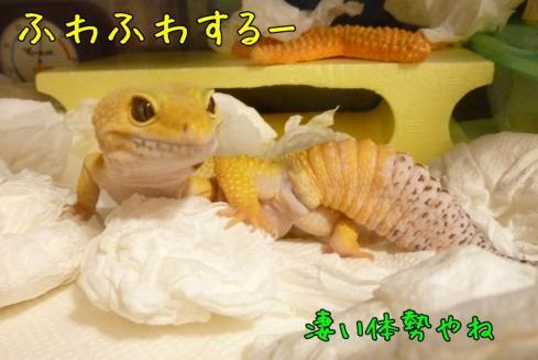 もんちゃん 002