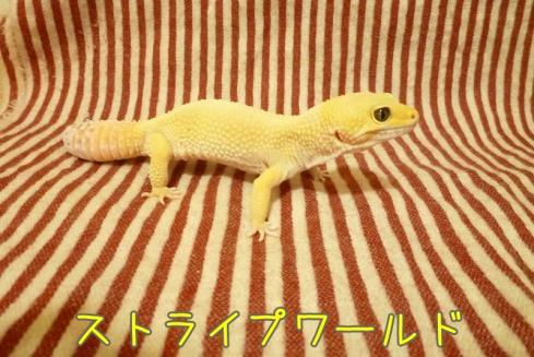 もんちゃん 117