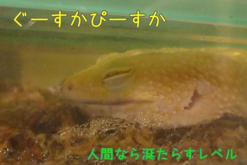 もんちゃん 001
