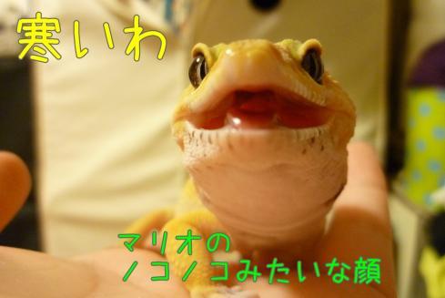 もんちゃん 063