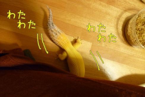 もんちゃん 074