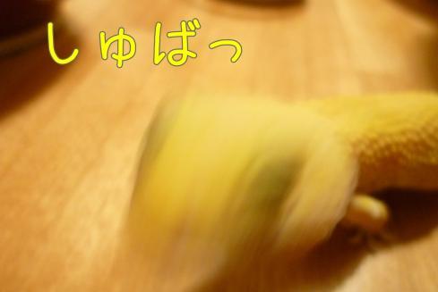 もんちゃん 073