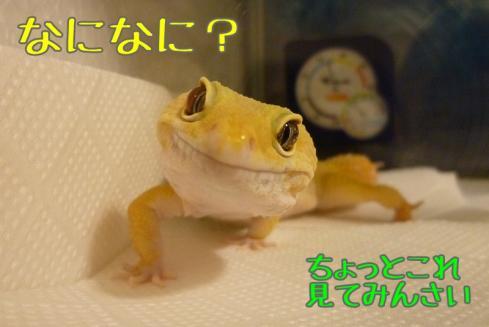 もんちゃん 211