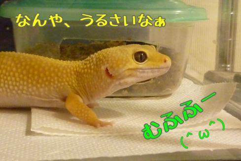 もんちゃん 205
