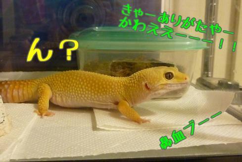 もんちゃん 204