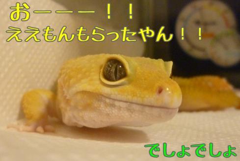 もんちゃん 218