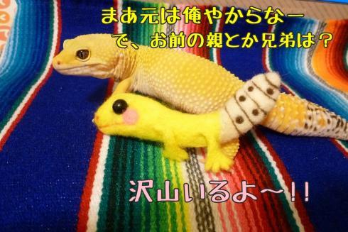 もんちゃん 124