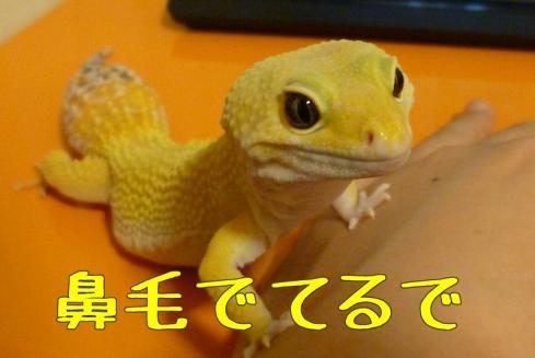 6もんちゃん 061