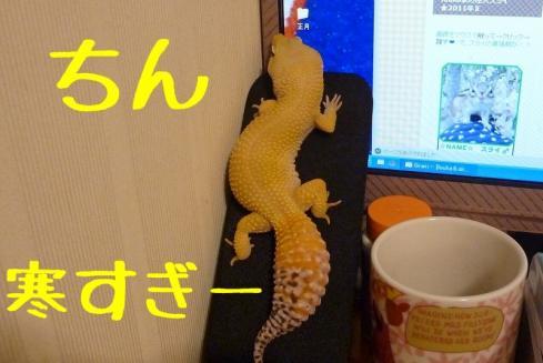 1もんちゃん 057
