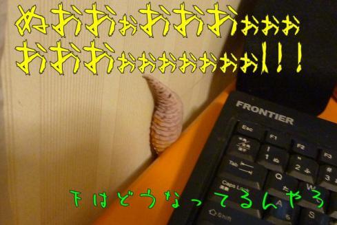 10もんちゃん 051