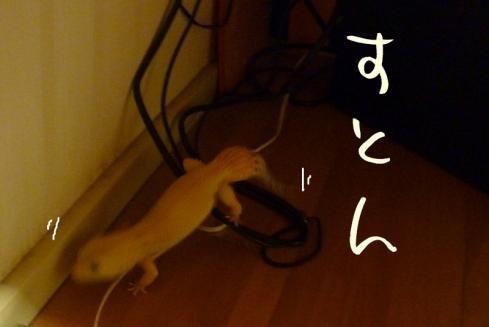 11もんちゃん 052