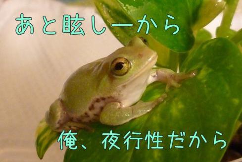 もんちゃん 017