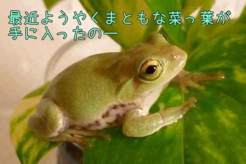 もんちゃん 021